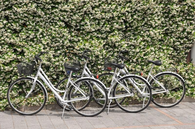 bicycles for guest in Tirrenia